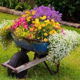 roaba flori